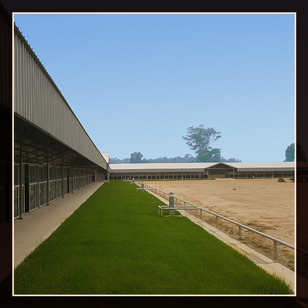Camping & Stables